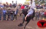 Matadoru Öldürmeyip Süründüren Çılgın Boğa