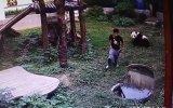 Pandanın Kafesine İzinsiz Giren Gence Bela Olması