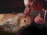 Sahibinin Gitar Çalmasıyla Uzak Diyarlara Giden Köpek