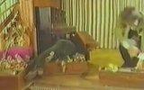 Babanın Oğlu  Cüneyt Arkın & Deniz Erkanat 1975  82 Dk