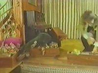 Babanın Oğlu - Cüneyt Arkın & Deniz Erkanat (1975 - 82 Dk)