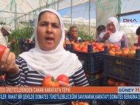 Domates Yiyerek Canan Karatay'a Meydan Okuyan Hanım Abla