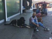 Taksim Meydanındaki Belalı Hırsız