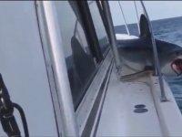 Balıkçı Teknesine Sıkışan Köpek Balığı!