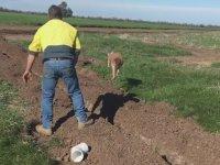 Kanguruyu Kurtarırken Fazla Sert Davranan Adam