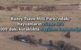 Hayvanlara Kamyonla Su Taşımak  Kenya