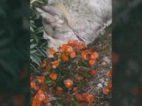 Ölen Yavrusunu Çiçeklerin İçine Gömen Köpek