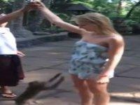 Memeci Maymun