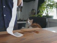 Paslı Bıçağı Tekrar Kullanılabilir Hale Getirmek
