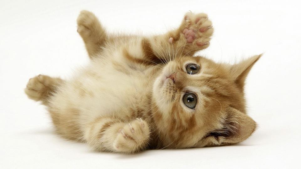 kedi resimleri ile ilgili görsel sonucu