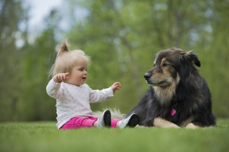 Komik Bebek Hayvan Dostlukları