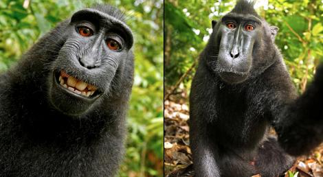 Komik Maymunlar