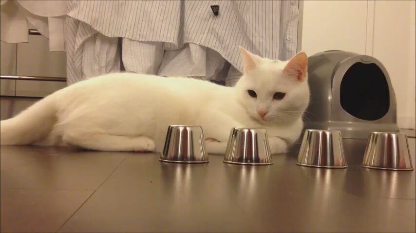 Funny cat tricks