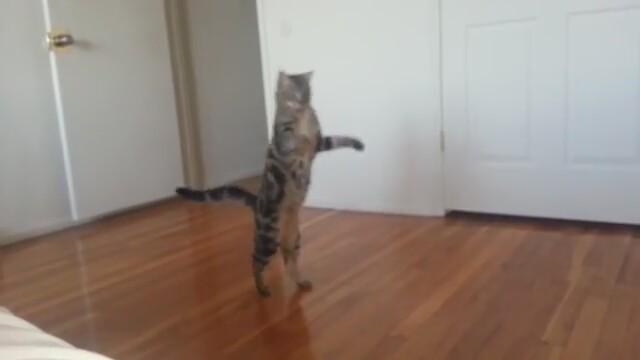 bringing a semi feral cat indoors