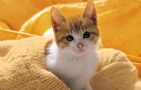 şirin kedi ile ilgili görsel sonucu