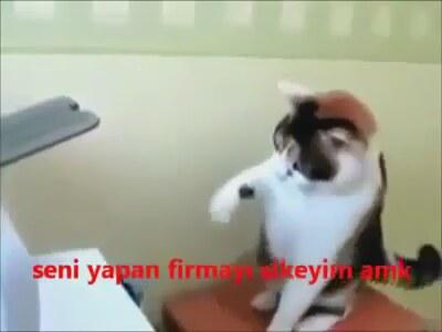 Kedinin Yazıcıyla İmtihanı 38