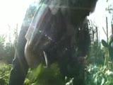 The Garden Fragman