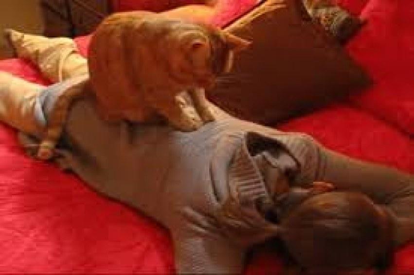 kedi masajı