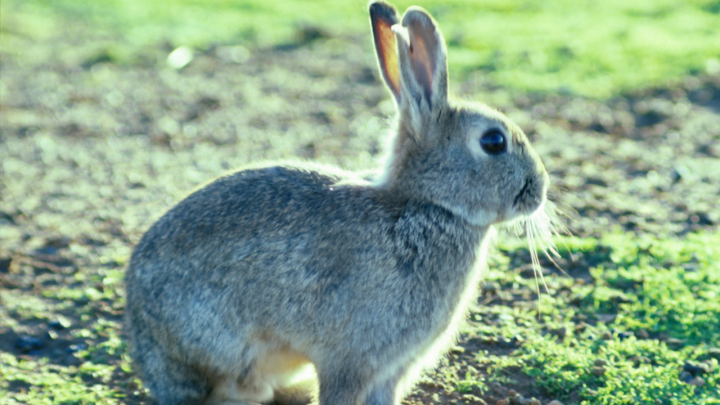 Tavşan Avı Videoları