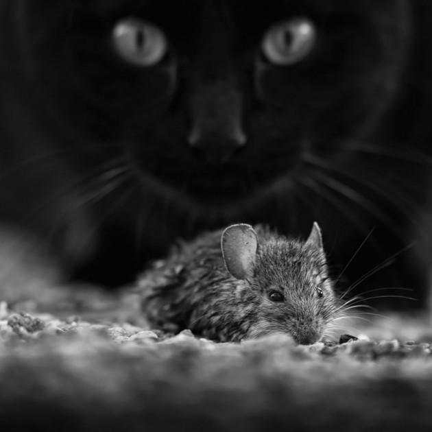 Siyah Beyaz Filtre ile Kedilerin Dünyası