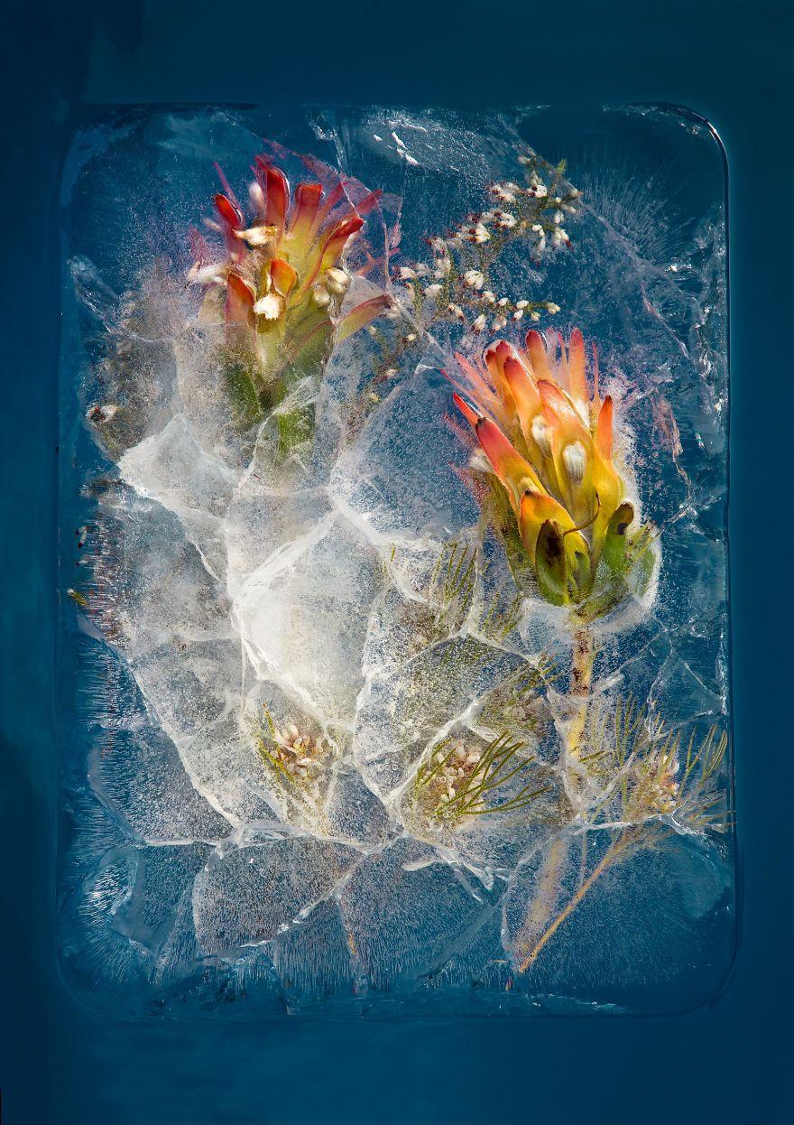 Bitkilerin Dondurulması ile Ortaya Çıkan Sanatsal Görüntüler