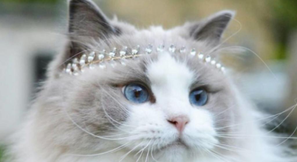 Kediler Dünyasının Prensesi: Prenses Aurora