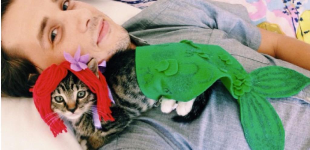 Sahiplerinin Elinde Maskot Olan Kediler