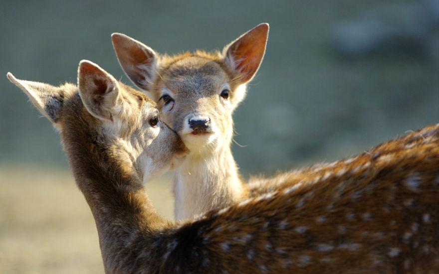 'Hayvanlar Bile Koklaşa Koklaşa' Lafını Haklı Çıkaran Fotoğraflar