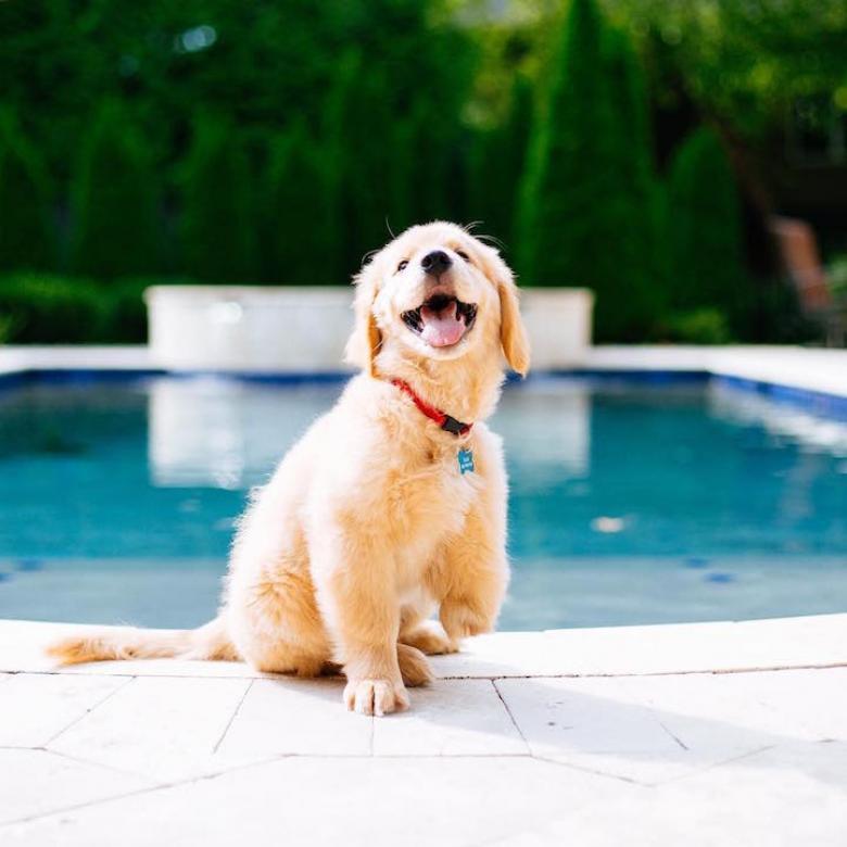 3 Ayağı Olmasına Rağmen Mutluluğundan Hiçbir Şey Kaybetmeyen Sevimli Köpek