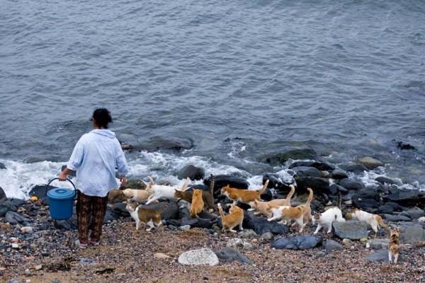Japonya'da Kedilere Adanmış Bir Ada