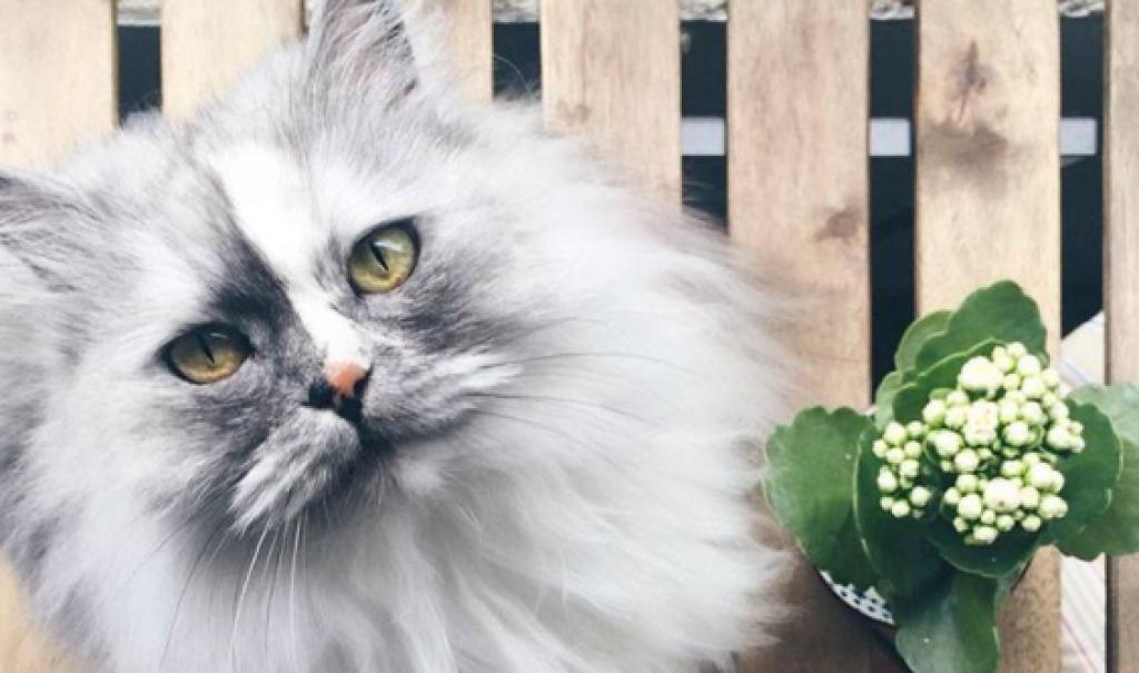 Sahibine Sanatsal Pozlar Veren Kedinin 15 fotoğrafı