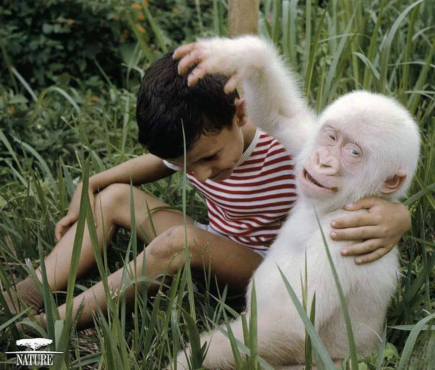 Albino Hastası Hayvanlar