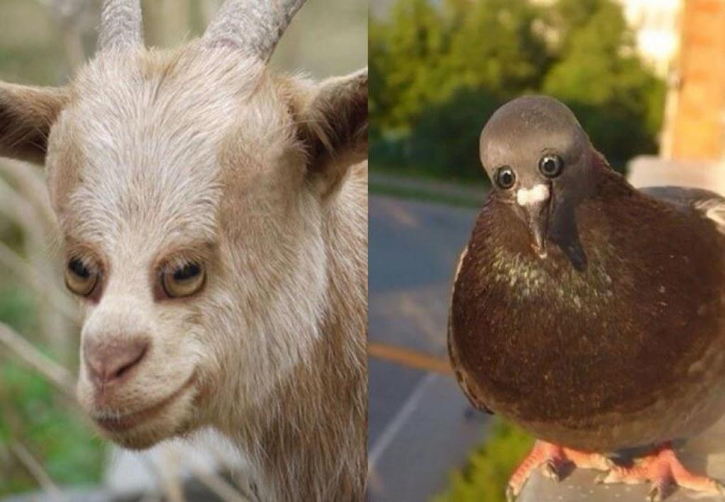 Hayvanların Gözleri Biraz Daha Büyük Olsa Nasıl Görünürdü?