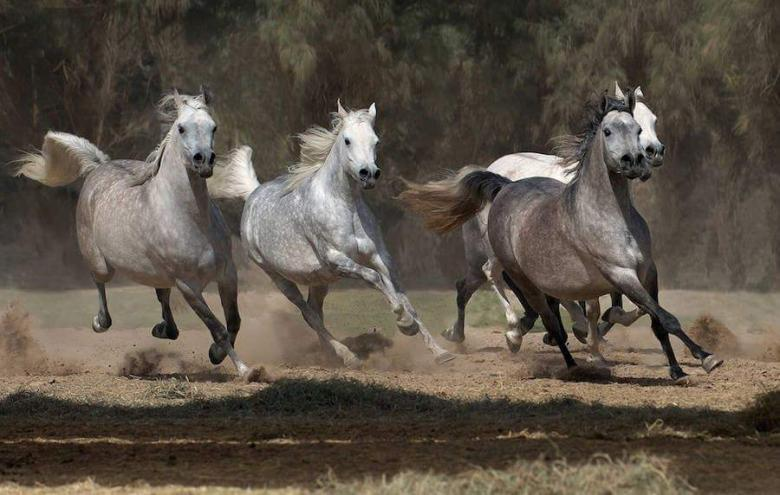 Atlara Ayrı Hayranlığı Olanlar Toplansın, Sergi Var