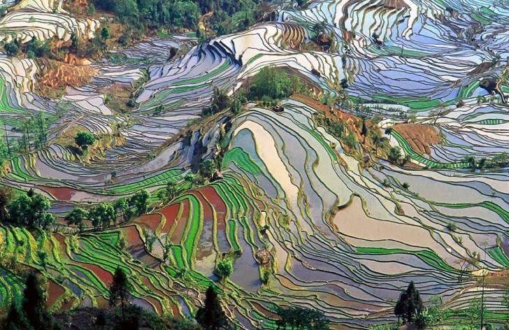 Çin'deki Pirinç Tarlalarının Kuş Bakışı Görüntüleri