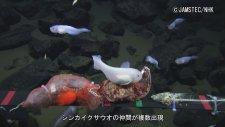 Mariana Çukuru'nda Balıkların Görüntülenmesi