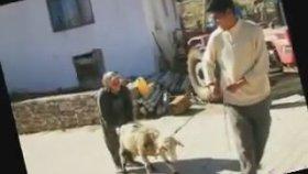 Aşık Gülfani - Garip Çoban