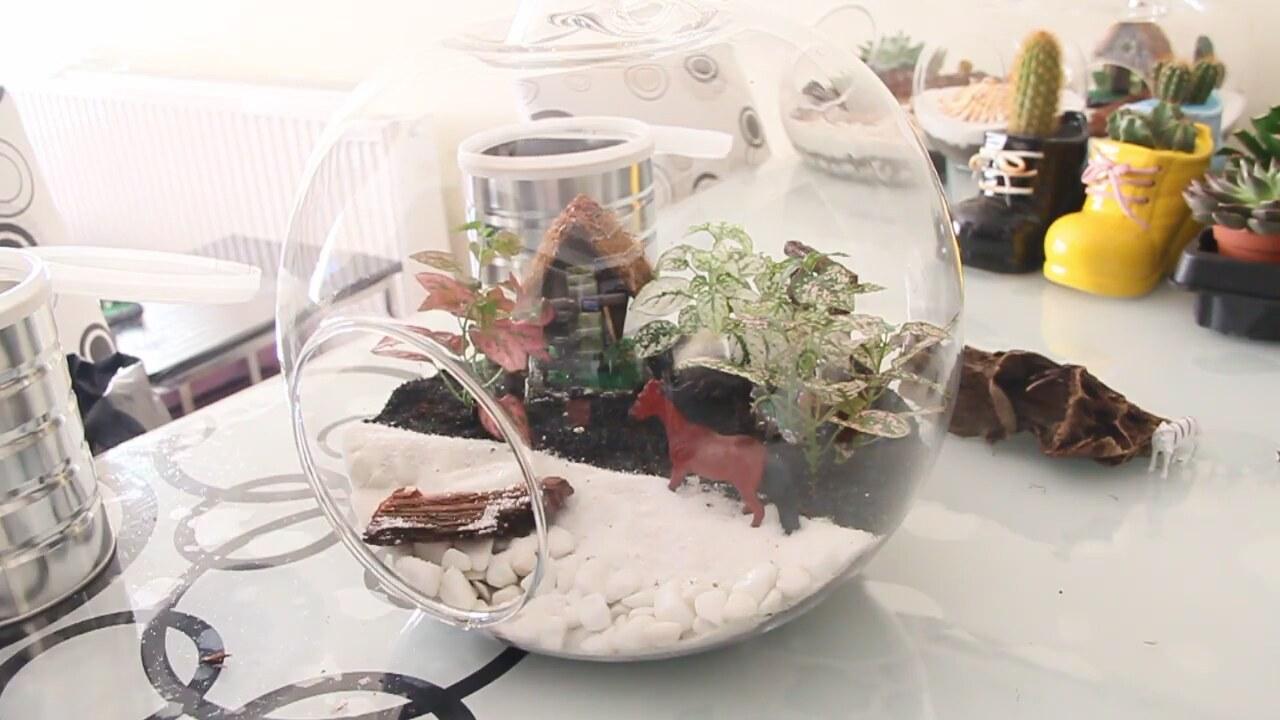 Evde terrarium yapımı