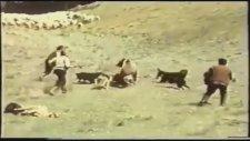Koyunu Yiyen Ayı'ya 300 Spartalı Saldırısı