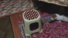 Fareyi Kedi ile Yakalayan Ev Halkı
