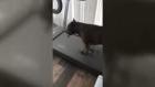 Melo'nun köpekleri sporsuz yapamıyor