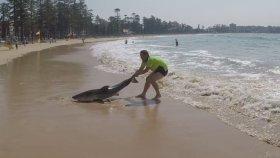 Yürek Yemiş Adamın Kıyıya Vuran Köpekbalığını Kurtarması