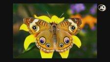 Hayvanlardaki Simetri, Renk Sanatı Ve Altın Oran Tesadüfe Dayanan Evrimin Olmadığının Delilidir