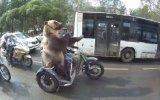 Motosiklet Üzerinde Hareket Çeken Ayı  Rusya