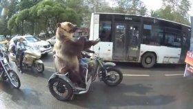 Rusya'da Motosiklet Üzerinde Etrafa El Kol Hareketi Yapan Terbiyesiz Ayı