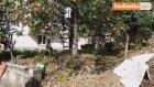 60 Yaşındaki Adam Ceviz Ağacından Düştü