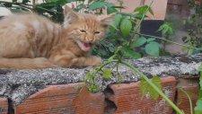 Yavru Kediler, Yavru Kediler Nasıl Beslenir, Yavru Kediler Nasıl Eğitilir, Yavru Kedilere Nasıl Bakı