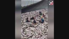 Okyanusta Balık Bırakmayan Türkler