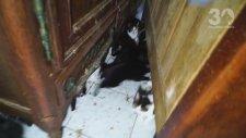 Bir Evden 130 Tane Kedinin Çıkması
