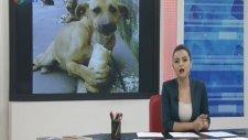 Spikerden Dikkat Çeken Sokak Hayvanları Konuşması!